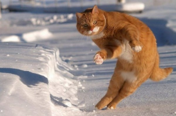 cat-in-snow-kar-kedi-01
