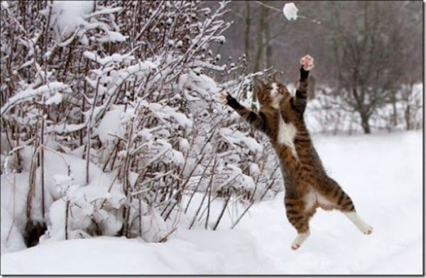 cat-in-snow-kar-kedi-02