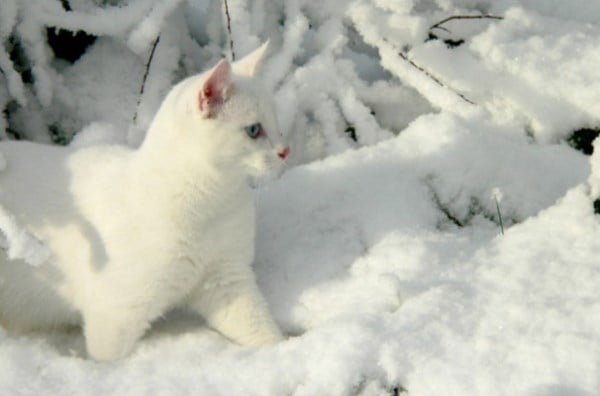 cat-in-snow-kar-kedi-03