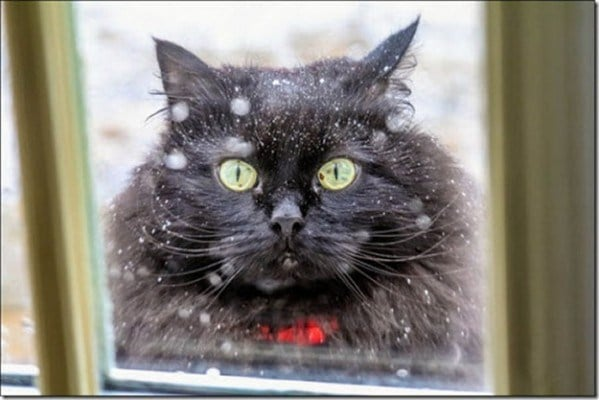 cat-in-snow-kar-kedi-10