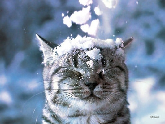 cat-in-snow-kar-kedi-13