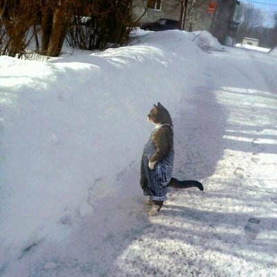 cat-in-snow-kar-kedi-17