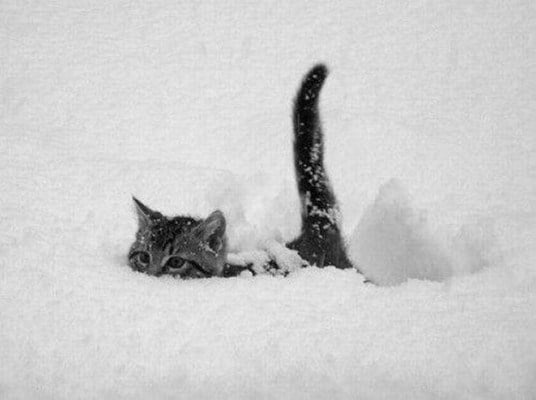 cat-in-snow-kar-kedi-22