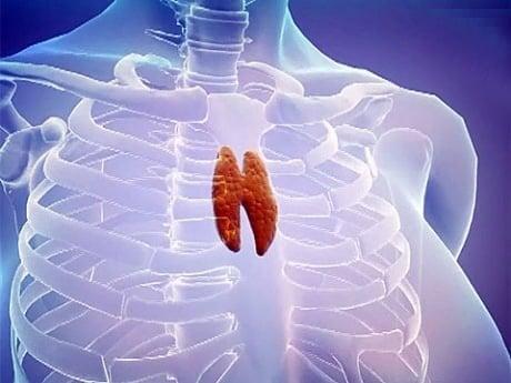 35 gramlık mucize organ