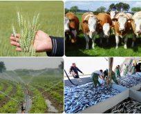 2017 yılında yapılacak tarımsal destekler belirlendi