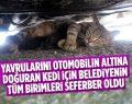 4 yavru doğuran anne kedi için Bilecik Belediyesi ekipleri seferber oldu